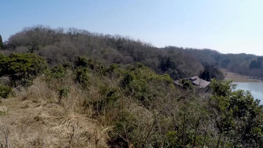 坂網鴨猟の舞台。片野鴨池とカモたち
